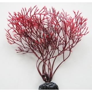 Горгонария красная 10 см