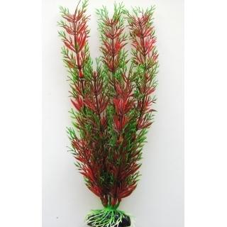 Перестолистник красный 30 см