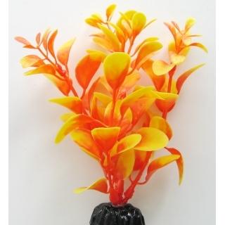 Людвигия оранжевая 10 см
