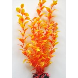 Людвигия оранжевая, 50 см