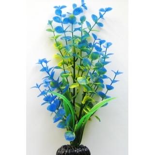 Бакопа синяя, 50 см