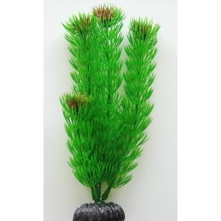 Амбулия зеленая 10 см