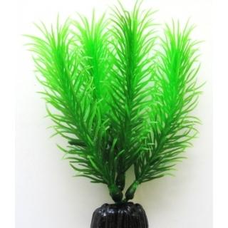 Перестолистник зеленый 10 см