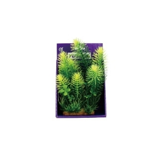 Кабомба зеленая 25 см