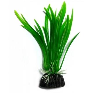 Аквариумное растение 10 см