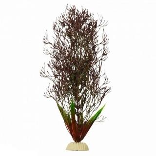 Горгонария черная 30 см